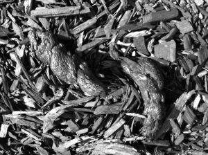 A pile of sh*t, black and white photograph, 2013.