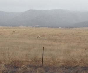 An antelope blends into the landscape.