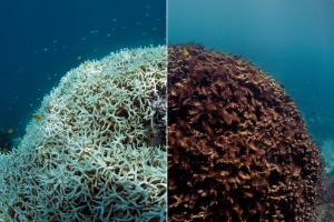 """24 before and after coral bleaching at Lizard Island."" Photo credit: The Ocean Agency / XL Catlin Seaview Survey."